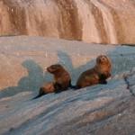 web seals